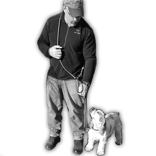 Jaeger Hands Free Dog Leash Made In Usa Mydogscool Com