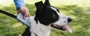 Using a universal scanner helps ensure a dogs microchip is not missed.